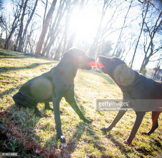 pets playing - dawn bess stock pictures, royalty-free photos & images