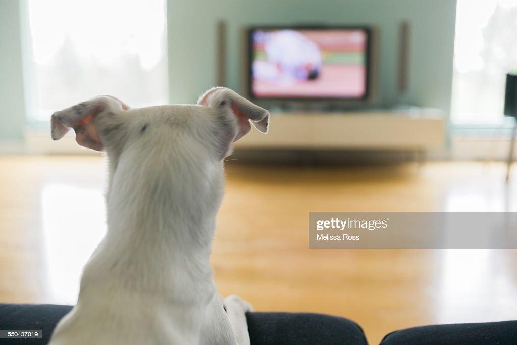 Pets Watching TV : Stock Photo