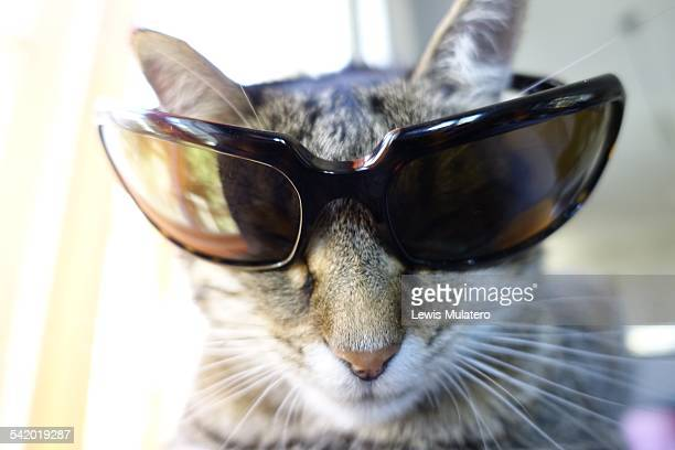 Pets Wearing Glasses