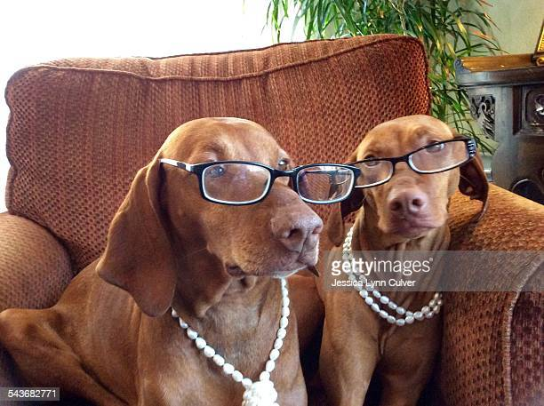 pets wearing glasses - lynn pleasant stock pictures, royalty-free photos & images