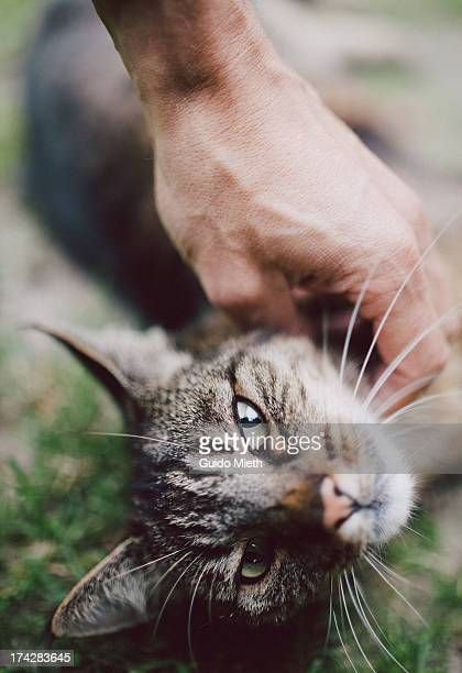 Petting the cat.