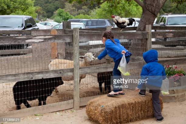 petting zoo at country market - terryfic3d bildbanksfoton och bilder