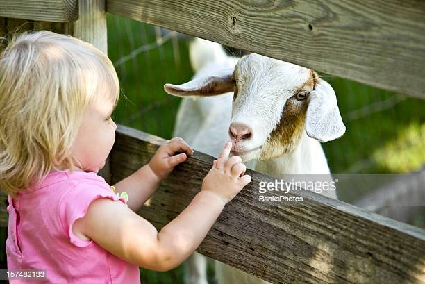 petting zoo child and goat - zoo stock pictures, royalty-free photos & images