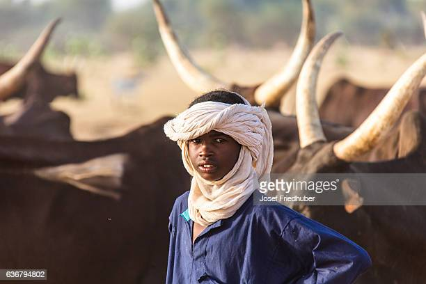 Peul nomads with cattle Sahel Niger