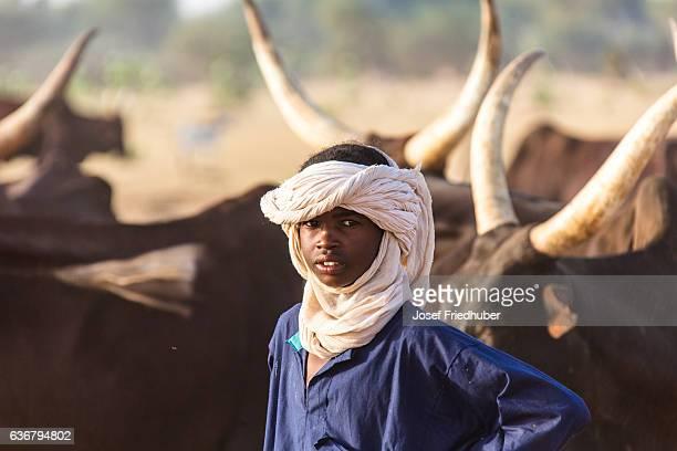 牛サヘルニジェールとペール遊牧民 - ニジェール ストックフォトと画像