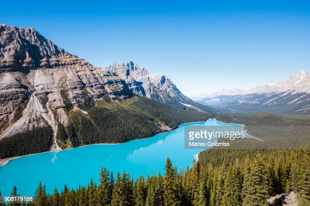 peyto lake, banff national park, alberta, canada - alberta stock pictures, royalty-free photos & images