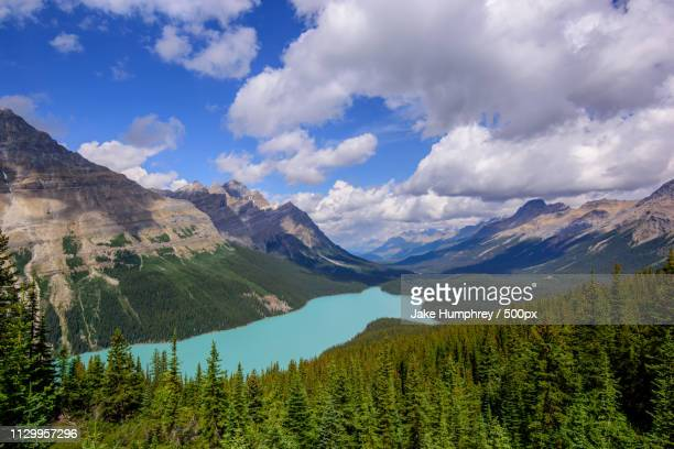 peyto lake, banff national park - glacier lagoon stock photos and pictures