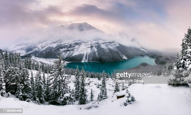 peyto lake just after late summer snow storm - canada stock pictures, royalty-free photos & images