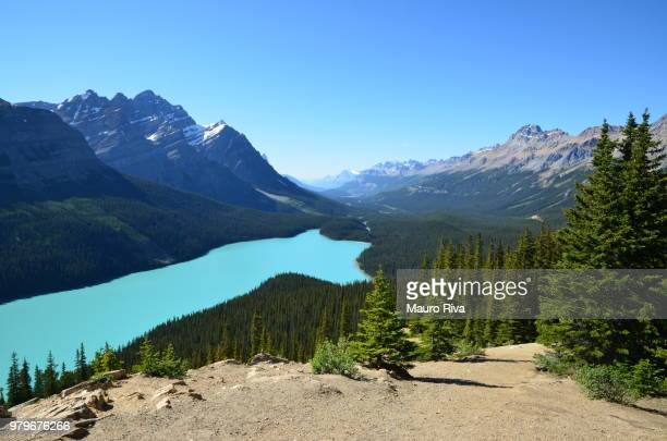 Peyto Lake surrounded by forest under Canadian Rocky Mountains in Banff National Park, Alberta, Canada