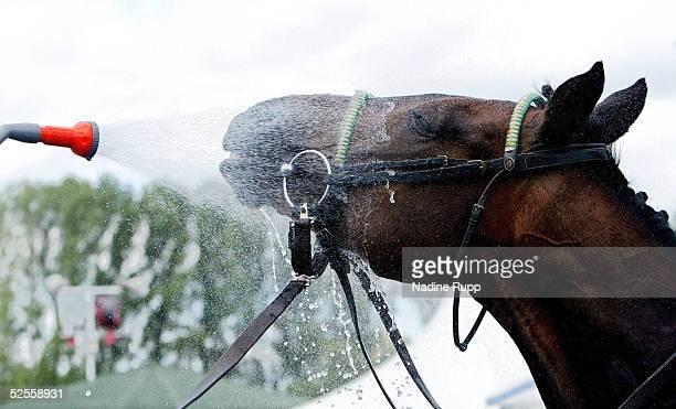 Pferdesport / Galopp: Deutsches Derby 2004, Hamburg Horn; Feature; eine kleine Erfrischung fuer das Pferd nach dem Rennen 26.06.04.