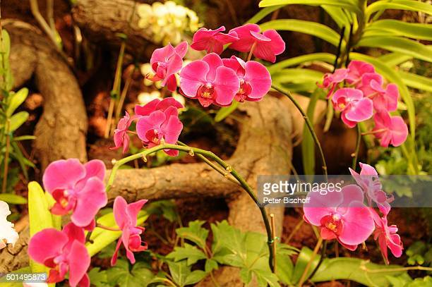 Pflanze Palmitos Park Maspalomas Insel Gran Canaria Kanaren Spanien Europa Kanarische Inseln Blüte Reise BB CD PNr 898/2011