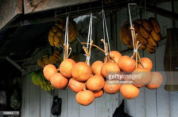 Phaleria macrocarpa fruits