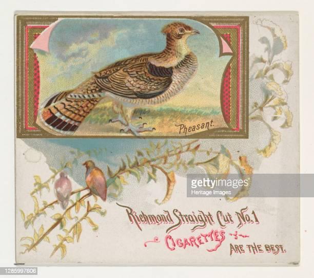 Pheasant, from the Game Birds series for Allen & Ginter Cigarettes, 1888-90. Artist Allen & Ginter.