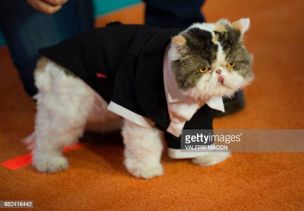 Phil the Cat from 'Aaron's Animals' arrives for the 30th Annual Nickelodeon Kids' Choice Awards March 11 at the Galen Center on the University of...