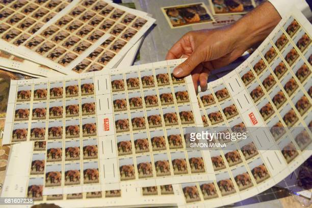 A philatelist or person who 'loves stamps' displays recentlylaunched second edition stamps featuring the 'Big 5' wild animals found within Kenyan...