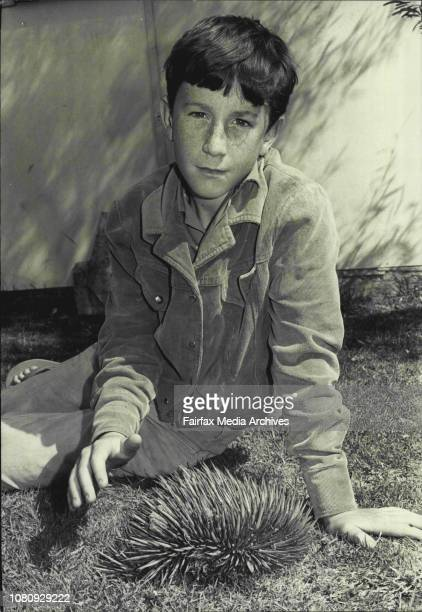 Philip Coller 12yrs of Croydon pictured with the spiny ant-eater which he found in a neighbours front garden. October 06, 1973. .