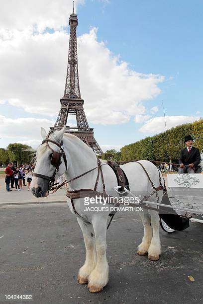 Philippe Delon owner of 'Paris Carriages Horse Walking Service' drives a pumpkinshaped carriage drawn by Balthazar an 11yearold shire horse from...