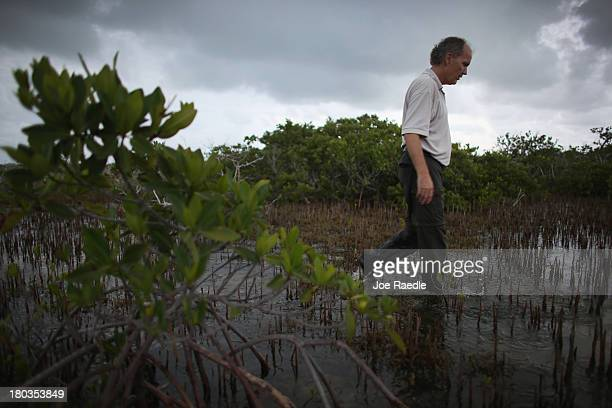 Phillip Hughes an Ecologist with the US Fish and Wildlife Service walks through an area where dead buttonwood trees are seen as live mangrove trees...