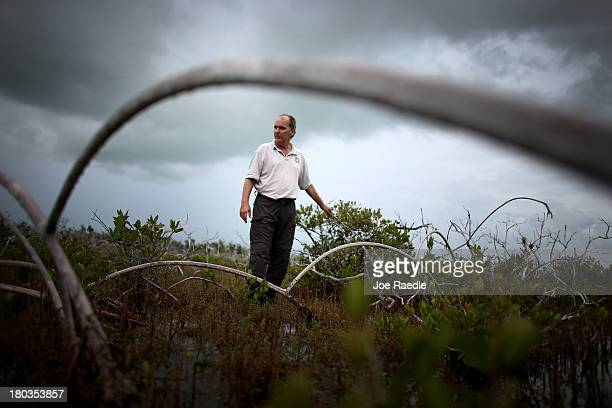 Phillip Hughes an Ecologist with the US Fish and Wildlife Service walks through an area where dead buttonwood trees are seen as mangrove trees grow...