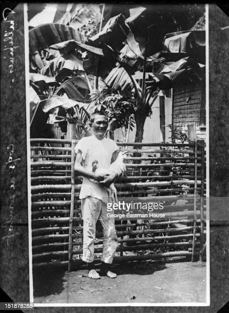 Phillipines coqs de combat between 1900 and 1919