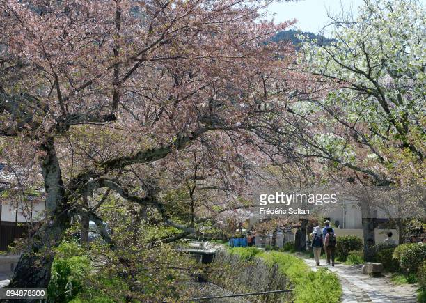 Philosopher's Walk in Kyoto The Philosopher's Walk is a pedestrian path that follows a cherrytreelined canal in Kyoto between Ginkakuji and Nanzenji...