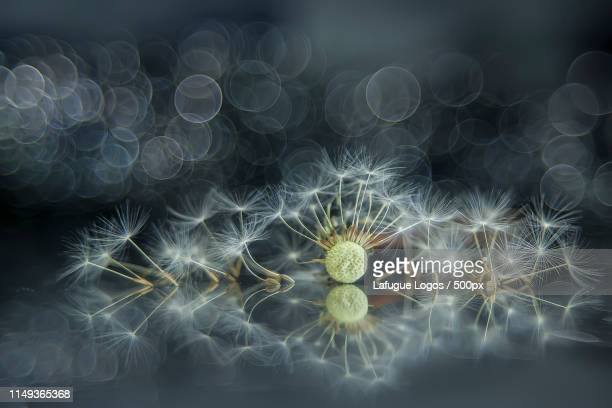 philosophical microcosm - philosophy stock pictures, royalty-free photos & images