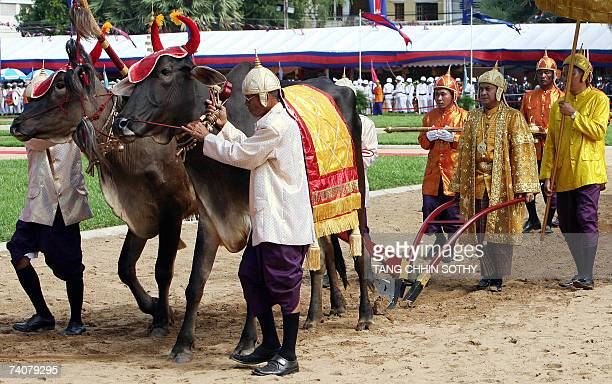 Cambodian royal officials lead royal Oxen as prince Norodom Sengharath plows during the annual Royal Plowing ceremony in Phnom Penh 05 May 2007...