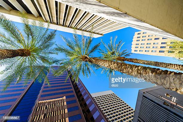 phoenix arizona skyscrapers and palm trees cityscape - phoenix arizona stock photos and pictures