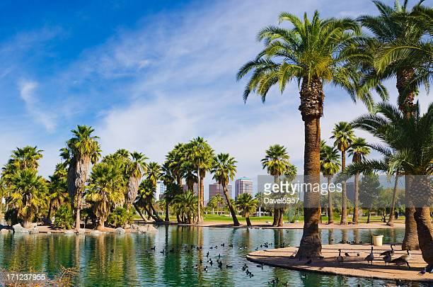 phoenix park, pond, palm trees, and skyline - phoenix arizona stock photos and pictures
