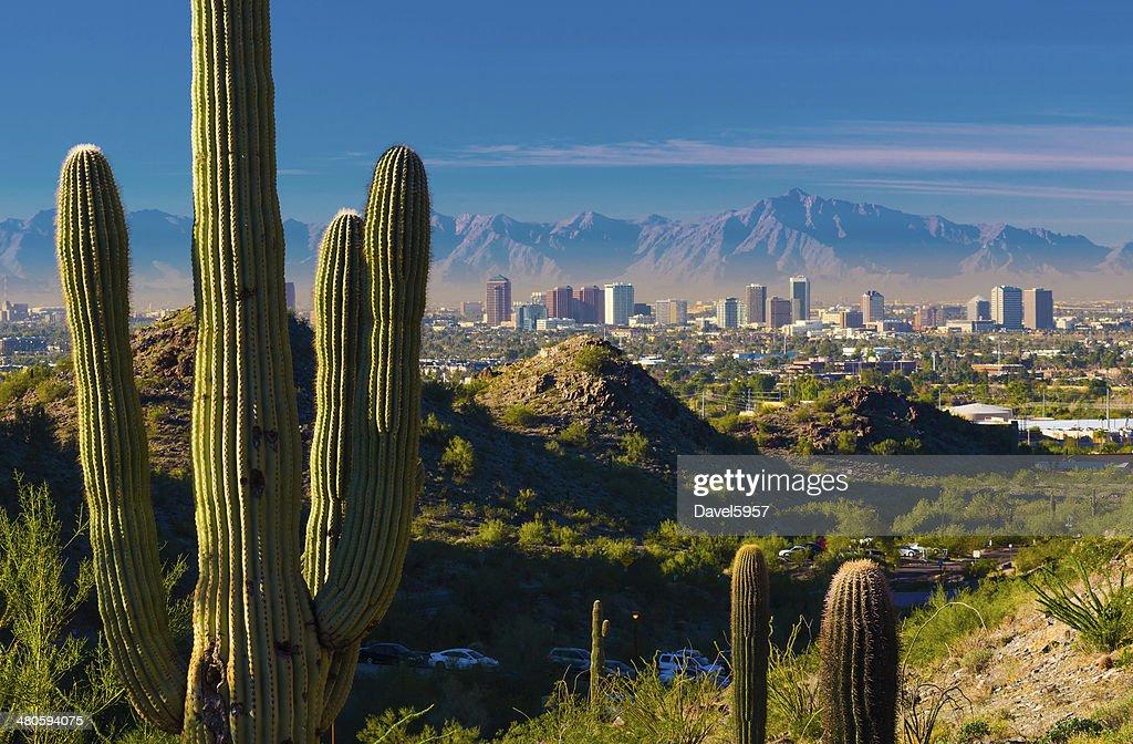 Phoenix skyline and cactuses : Stock Photo
