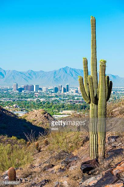 phoenix skyline framed by saguaro cactus and mountainous desert - phoenix arizona stock photos and pictures