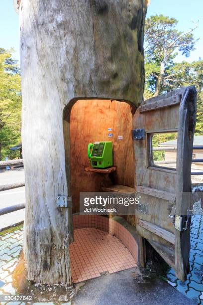Phone booth in a tree trunk in Yakushima Island, Japan