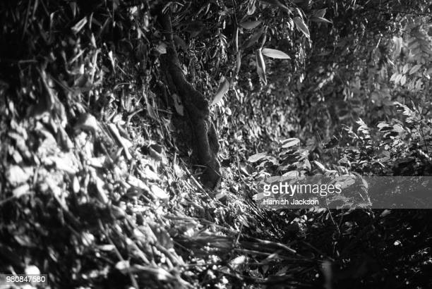 phosphorescent forest. havelock, andaman islands, india. 2014. - phosphorescence stock pictures, royalty-free photos & images