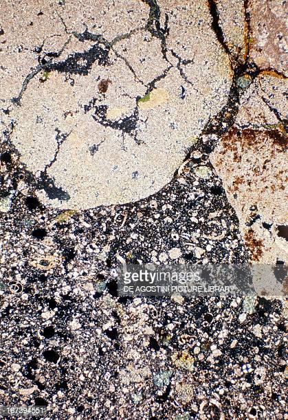 Phosphorite sedimentary rock under microscope