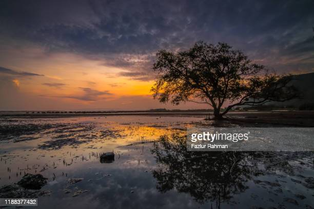 photo at sunrise with a tree in the foreground - banda aceh stock pictures, royalty-free photos & images
