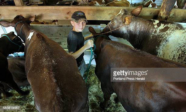 Photo by Gregory Rec/ Staff Photographer Eric Carroll of Lyman ties up Sapphire a milking shorthorn after the cow got a bath in the 4H dairy barn at...