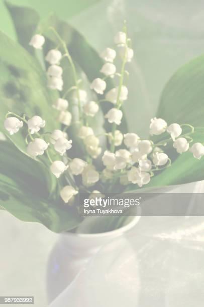 photo by: iryna tuyakhova - bouquet de muguet fotografías e imágenes de stock