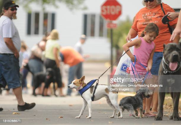 Photo by Lauren A. Little August 18, 2010 Boyertown Dog Days Jasmine A. Fink gets in a tangle with her dog Cosmo , a rescued Schnauzer/Yorkie mix,...