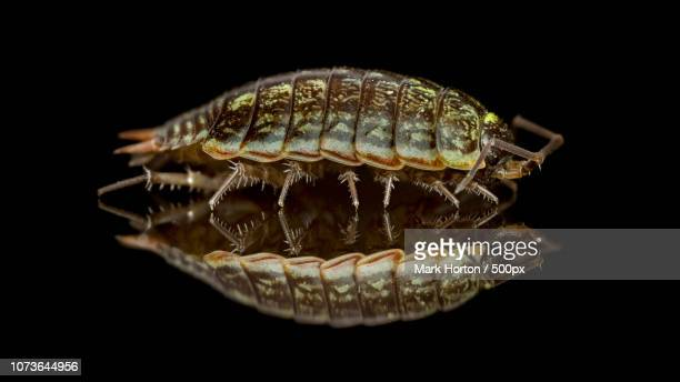 photo by: mark horton / 500px - potato bug stock pictures, royalty-free photos & images