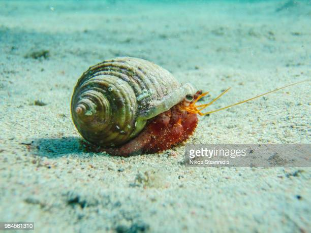 photo by: nikos stavrinidis - hermit crab stock pictures, royalty-free photos & images