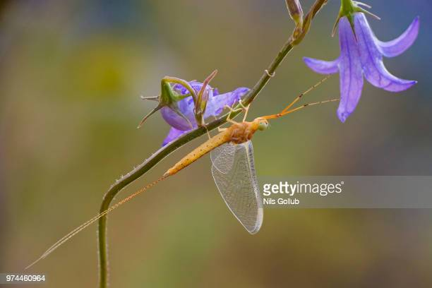photo by: nils gollub - mayfly stock pictures, royalty-free photos & images