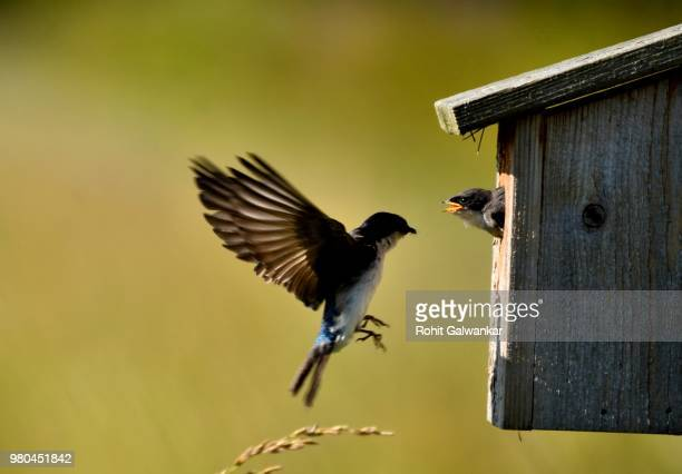 photo by: rohit galwankar - birdhouse stock pictures, royalty-free photos & images