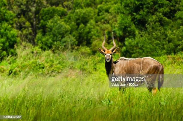 photo by: vaida jain / 500px - swaziland fotografías e imágenes de stock