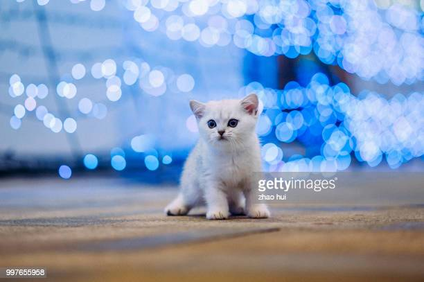 photo by: zhao hui - vertebrate stock pictures, royalty-free photos & images