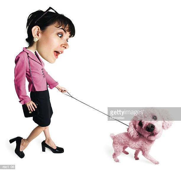 photo caricature of a young caucasian brunette woman in a pink blazer and black skirt as she walks her large pink poodle - poodle skirt stock photos and pictures