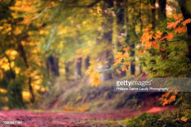 Photo de forêt en automne