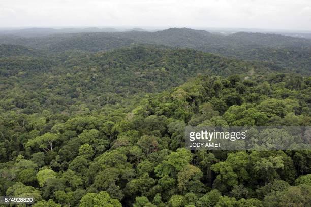 Photo de la forêt guyanaise prise dans les environs du village de Saül Un hélicoptère participe depuis le 02 mars 2007 aux recherches pour retrouver...