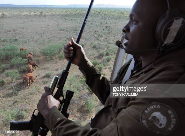 Photo made on March 19, 2012 shows a Kenya Wildlife Services, KWS, veterinary, as he scouts from a helicopter for a suitable elephant to dart from...