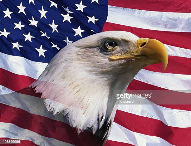 photo montage: american bald eagle and american flag - bald eagle with american flag stock pictures, royalty-free photos & images