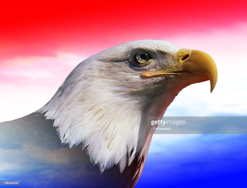 Photo Montage American Bald Eagle With Red White Blue Sky Stock Foto